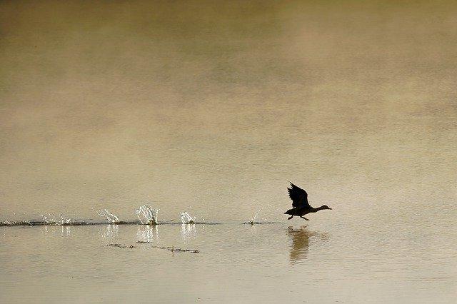 Morning Fog Bird Hay Autumn